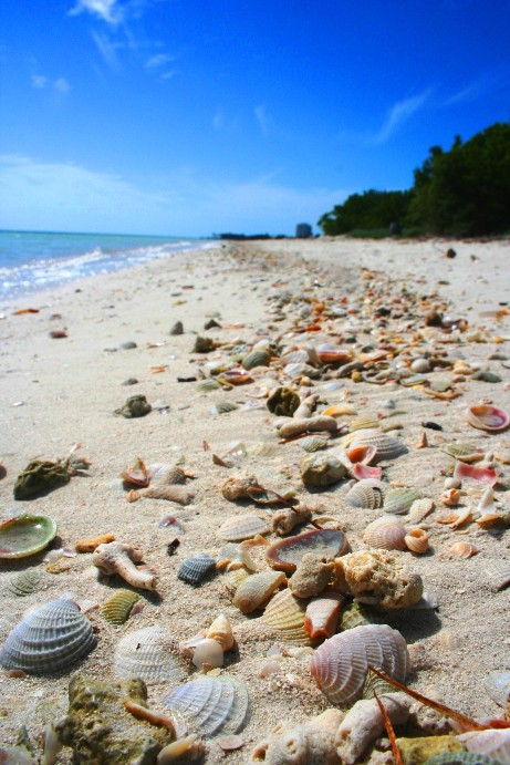 Coco Plum Beach  Florida Keys Beaches near Coral Lagoon