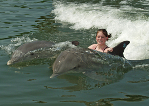 http://www.keysrentalsonline.com/custimages/DRC-swim-with-dolphins.jpg