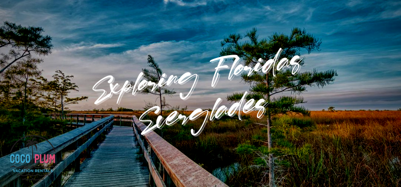 Exploring Floridas Everglades
