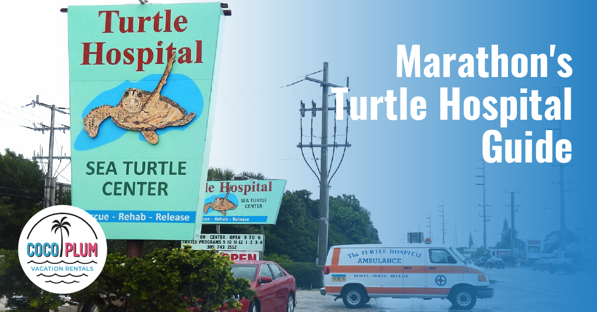 Guide To Visiting The Turtle Hospital in Marathon
