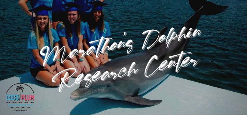 Visiting Marathons Dolphin Research Center