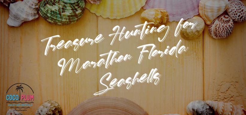 Treasure Hunting for Marathon Florida Seashells