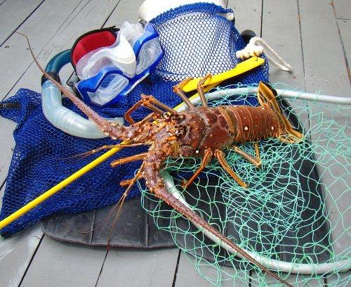 Florida Keys Mini Lobster