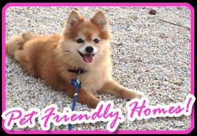 pet friendly rentals in the florida keys
